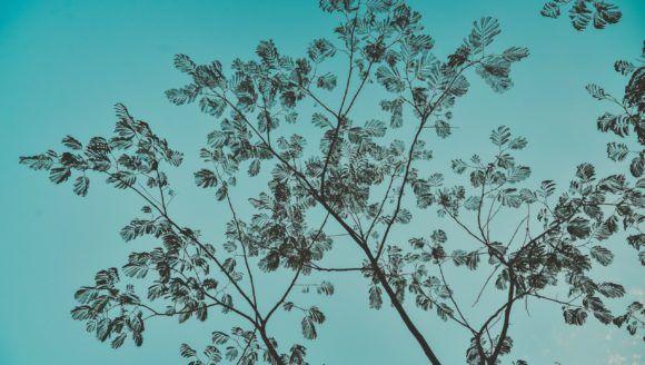 blue-background-blue-sky-close-up-1864189